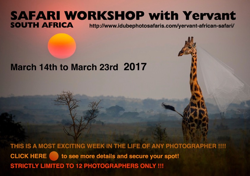 safari-workshop-2017